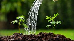 Yazımızda bitki su tüketimi anlatılmaktadır.Su tüketimini etkileyen faktörler bitki çeşidi, toprak bünyesi ve sulama çeşididir (damla sulama, yağmurlama Sulama)